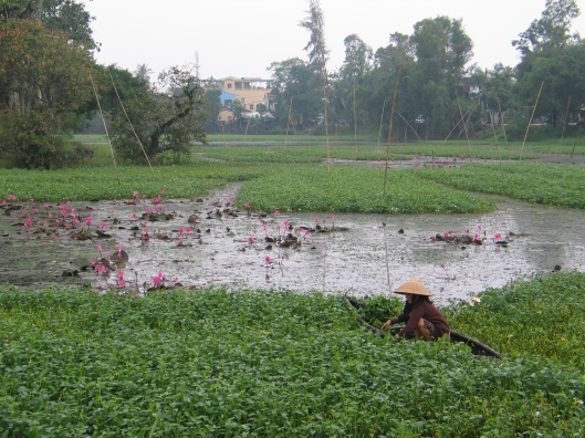 A lotus pond in Hoi An.