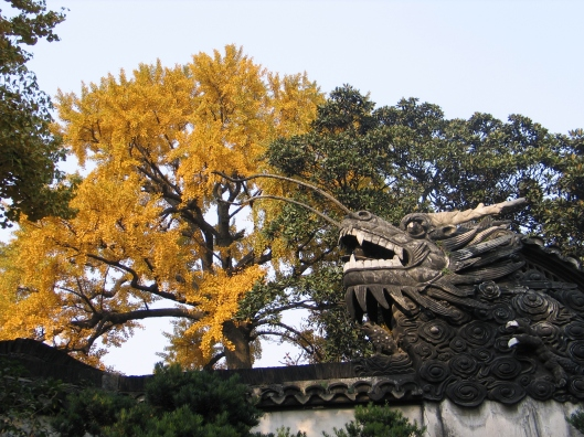 The Autumn Fire Dragon in Shanghai.