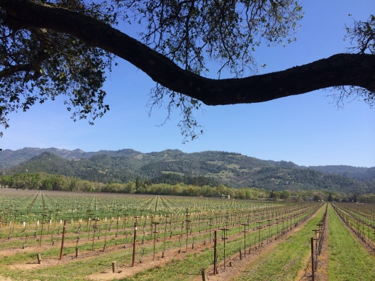 The Napa Valley.