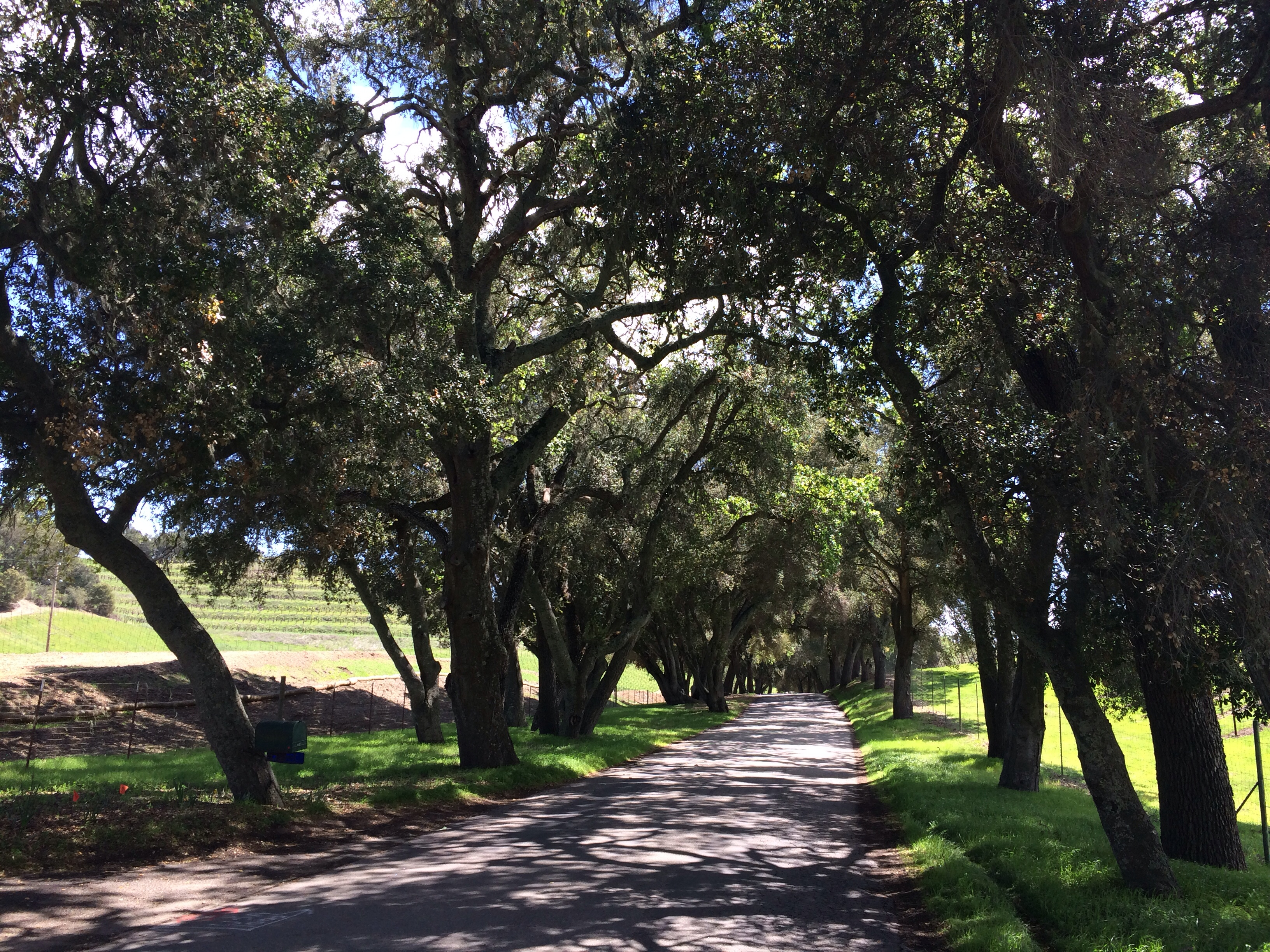The Magical California Roads of Paso Robles Wine Country