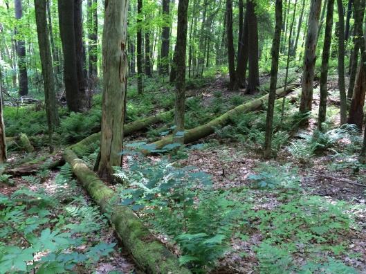 Fallen monarchs in rebirth on the forest floor.
