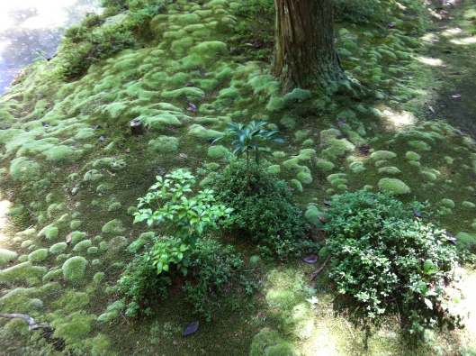 The moss carpet at Saiho-ji.