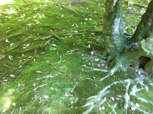 Tree veins and moss.