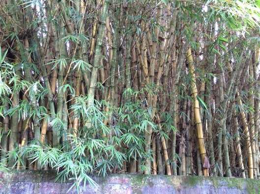 The backyard of the Tamb-cave features bamboo.