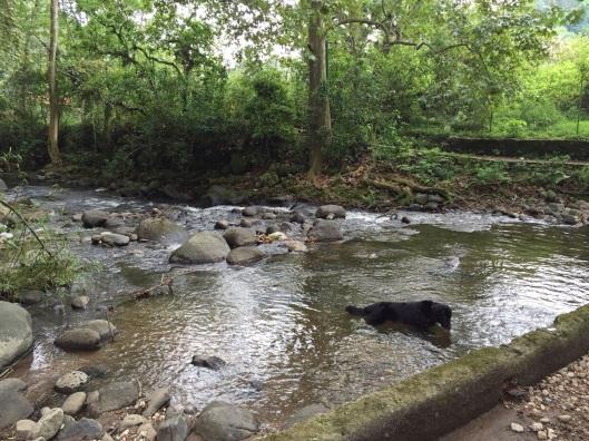 A village dog enjoying a swim to Jan's left.