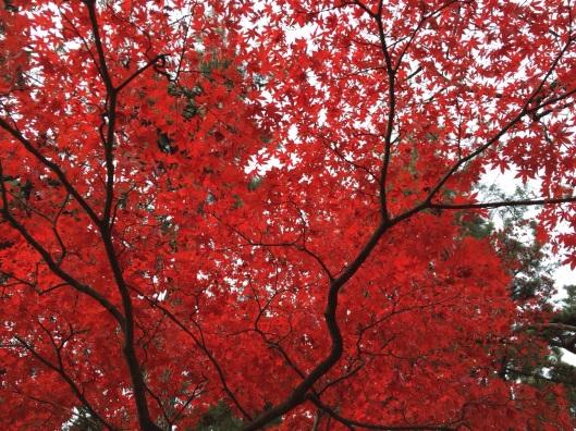 Shinjuky-Gyomae Park in Tokyo this December.