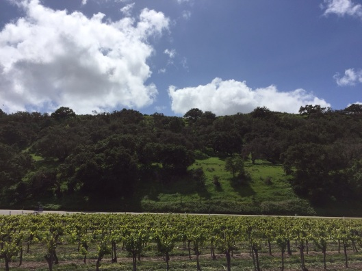 Riverbench Winery has the oldest vines around, with this view from their parking lot.